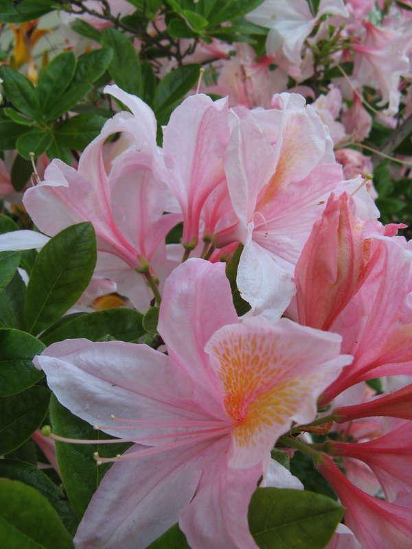 Цветы фото с характеристикой