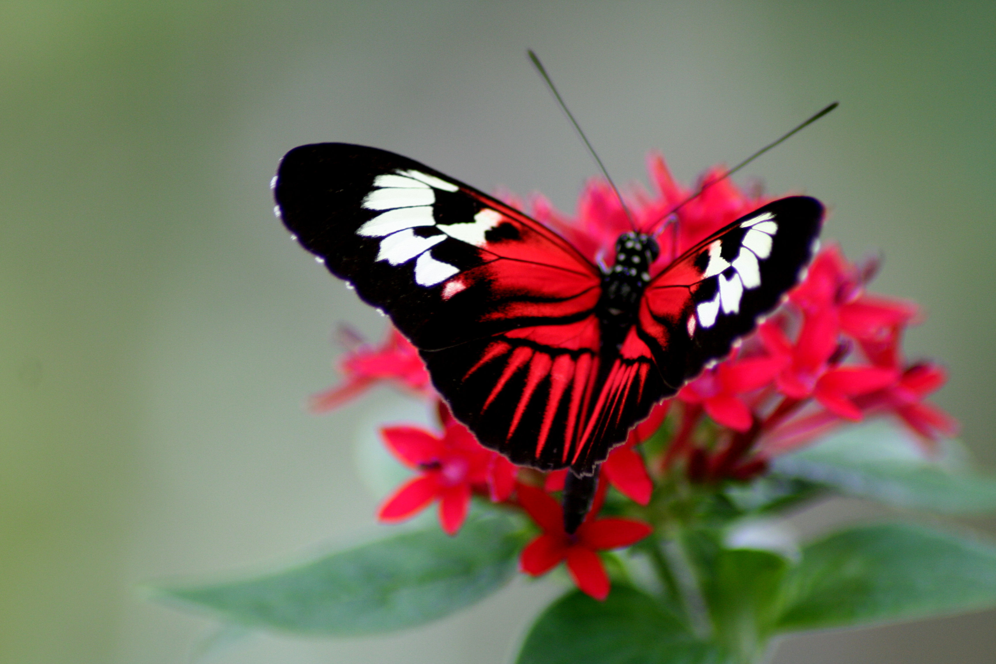 25 Beautiful Butterfly Pictures (Ajith, бабочки, Andrea, Butterfly). butterfly21...