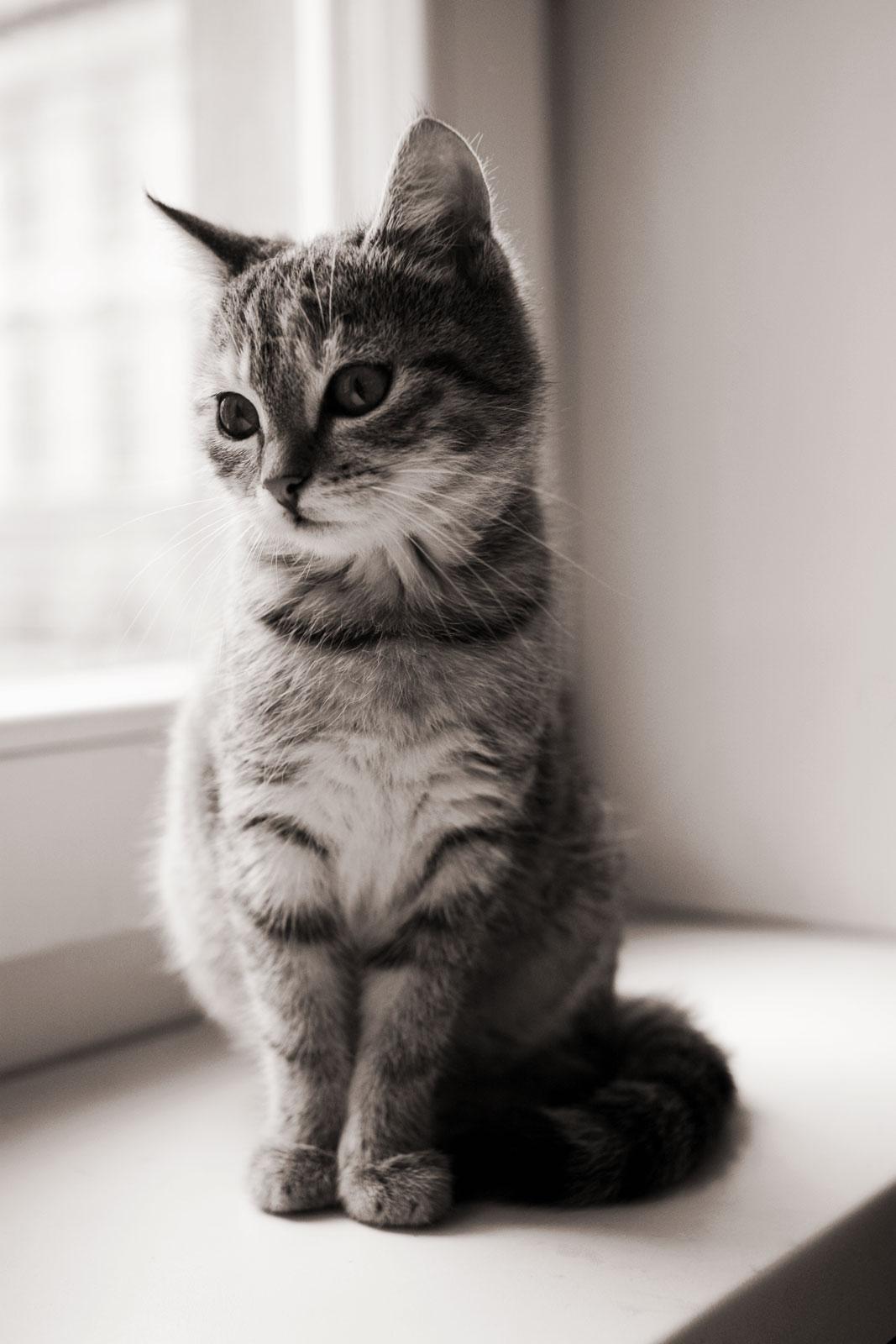Коты, кошки, котята 911