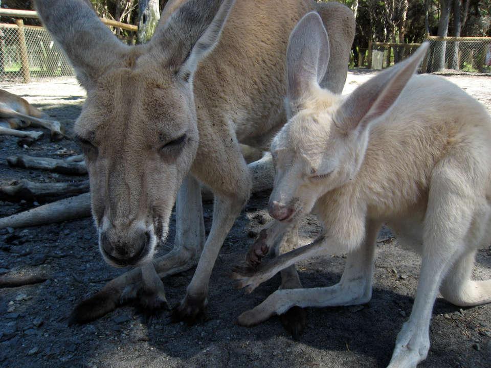 Секс девушки с кенгуру 17 фотография