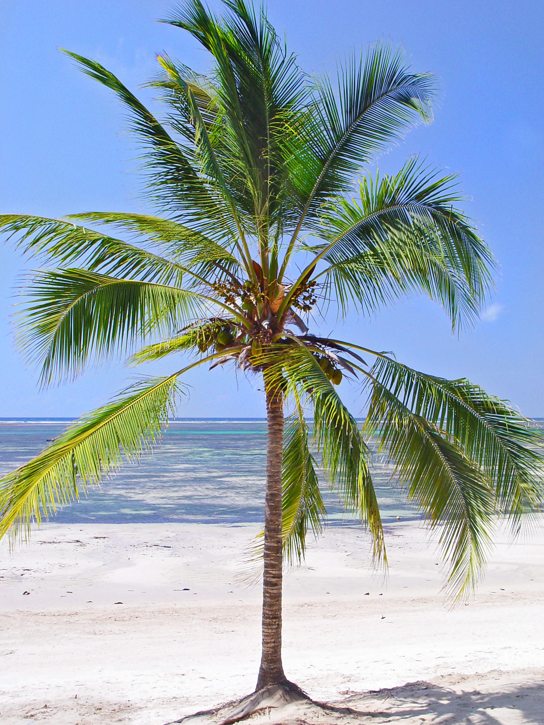 Пальмы фото для детей