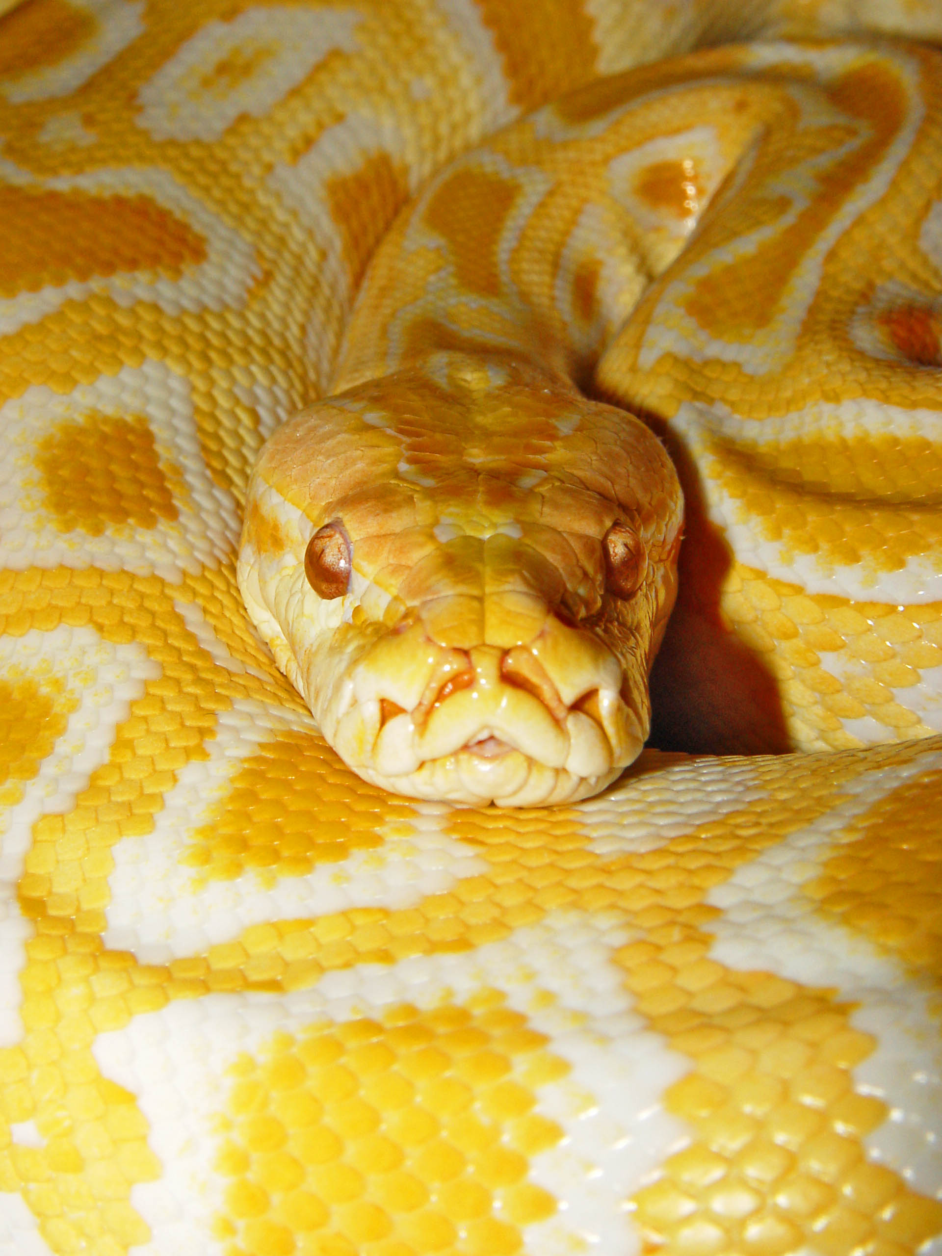 Приготовить змею в домашних условиях