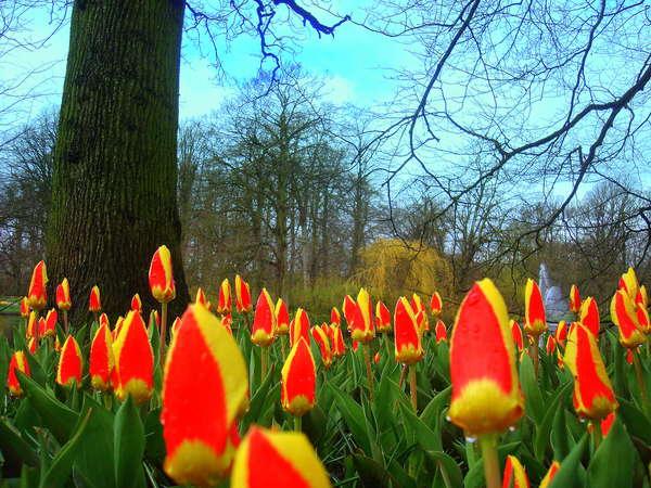 https://www.bestgraph.com/img/users/bestgraph/tulip/medium/2412250315.jpg
